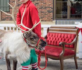 Reindeer visit at holiday festival
