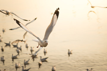 eagulls flying over the Sea