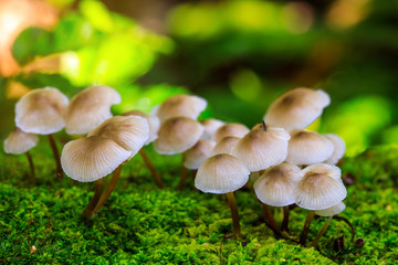 Colourful  of mushroom in the rainforest.