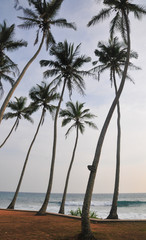 Beach with white sand and palm trees