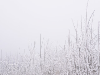 A minimalistic winter background with branches of trees covered with snow with frost, in the foreground.