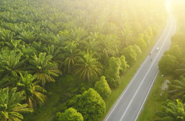 Aerial view of Palm Plantation at South East Asia.