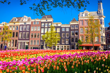 Traditional old buildings and tulips in Amsterdam, Netherlands