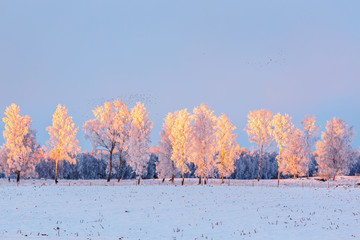 Trees in wintry landscape with flock of birds at sunset