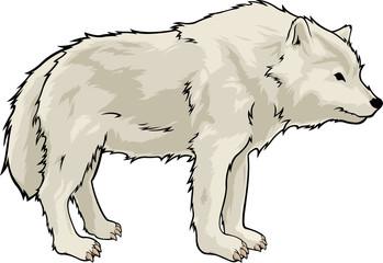 Cartoon isolated beautiful white wolf on white background