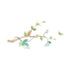 木の葉とアイビー、素材