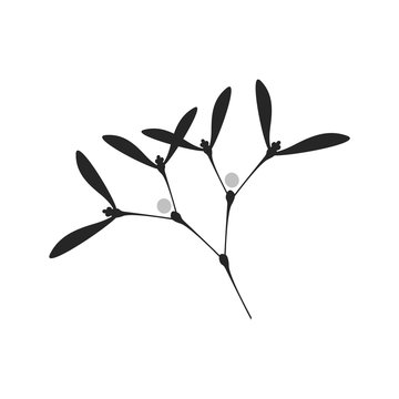 Vector Illustration: Silhouette of Simple Mistletoe Branch. Isolated.