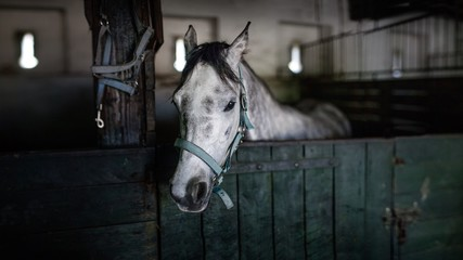 White horse in the barn in Poland
