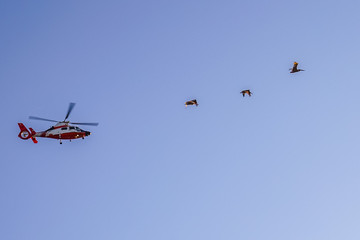 Pacific Ocean Coast, pelicans and helicopter fly in the sky at sunset San Francisco California
