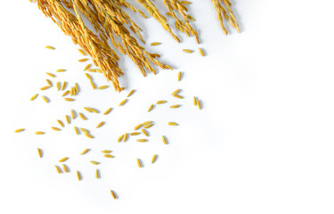 rice seeds isolated on white background