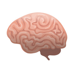 Human brain icon, flat style. Internal organs symbol the side view, isolated on white background. Vector illustration