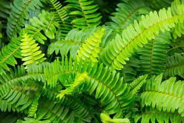 Green leaf texture background,  Green pattern