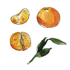 Set of fresh tangerine, pieces and green leaves isolated on white background. Hand drawn watercolor and ink illustration.