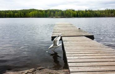 Wooden pier with seagulls on beautiful lake in the national park Repovesi, Finland, South Karelia.