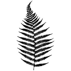 Forest fern. Black isolated silhouette on white background. Vector illustration.