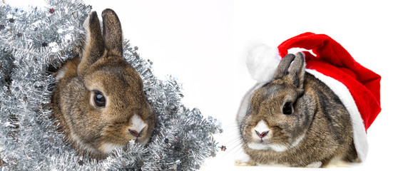 a happy christmas card with a little rabbits