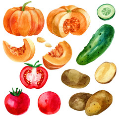 Watercolor illustration, set, image of vegetables, tomatoes, potatoes, pumpkin and cucumber.