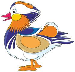 Motley mandarin duck, vector illustration in cartoon style