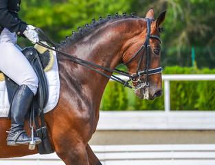 Foto op Aluminium Paardrijden Dressage horse and rider. Bay horse portrait during dressage competition. Advanced dressage test.