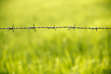 Barbed wire fence in nature field