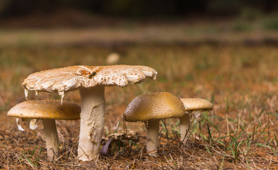 side view of mushrooms