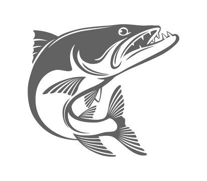 baracuda fish