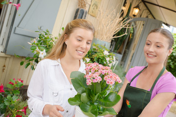 Client choosing a plant at the florist's