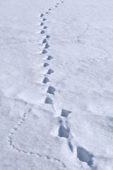 Spuren von Fuchs und Maus im Winter