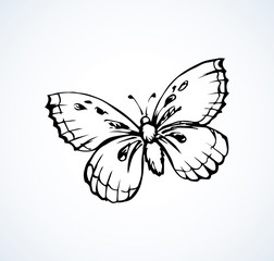 Butterfly. Vector drawing