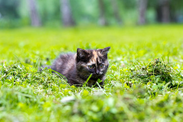 Black small cat with a red spot climbing in the grass