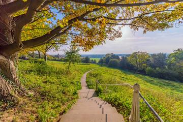 Scenic view of Richmond park walking path