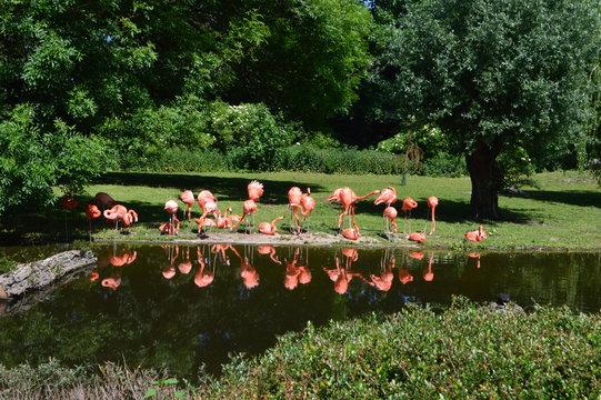 Flamingo, Tiere, Vögel, Natur, Garten
