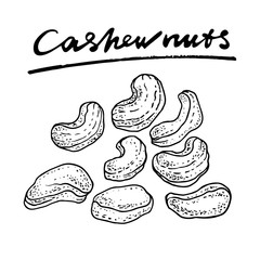 Cashew nuts. Vector hand drawn graphic illustration.