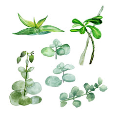 Succulents isolated on a white background. Watercolor hand drawn illustration