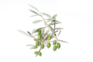 Olive branch with green olives isolated on white background. Green olives with leaves. Copy space.
