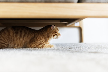A cat hiding under the couch