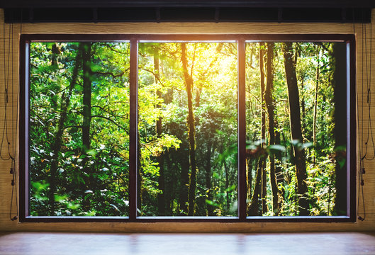 Looking through window, tropical forests in sunrise view
