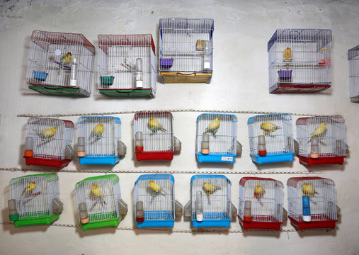 Canary cages are seen inside a shop for sale at a bird market in Kabul