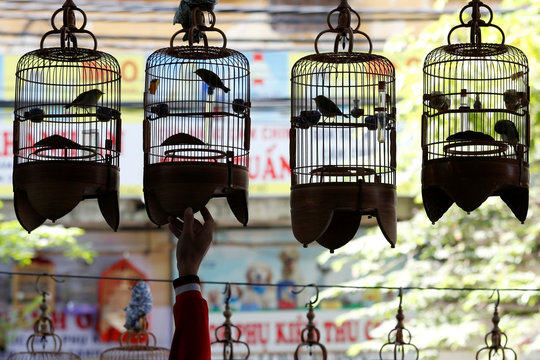 A white-eye bird owner hangs his bird cages at a cafe while listening to bird song in Hanoi