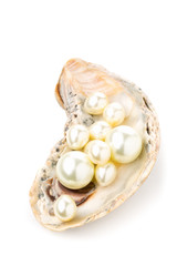 Multiple pearls in oyster sea shell