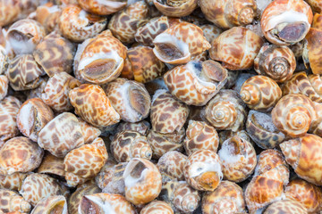 Clam at the seafood market , Thailand