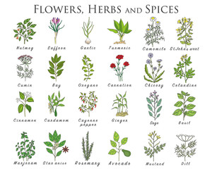 Set of spices, herbs and officinale plants icons. Healing plants.
