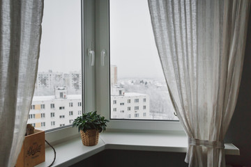 Winter landscape outside the window with curtains. On the windowsill is green houseplant. The atmosphere of coziness.