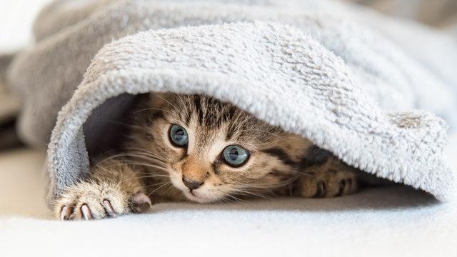 kleines Katzen Baby spielt mit ihrer Pfote und versteckt sich