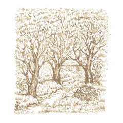 Hand drawn beautiful garden with trees. Sketch, vector illustration.