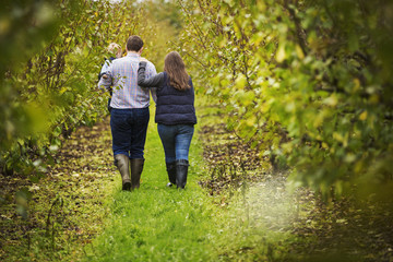 A couple, a woman and man carrying a young toddler in his arms, walking between rows of fruit trees in autumn.
