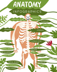 Skeleton Anatomy Infographics