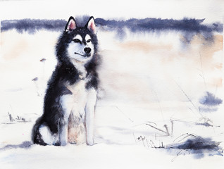 Husky on the background of a snowy field. Watercolor painting. A dog in the nature. Winter, New Year, Christmas picture.