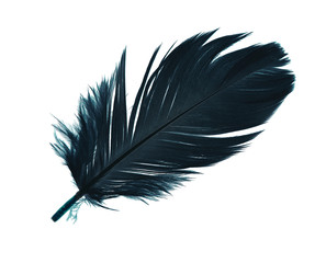 Beautiful Prussian blue feather isolated on white background