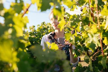 Portrait of pretty Caucasian woman working in vineyard.